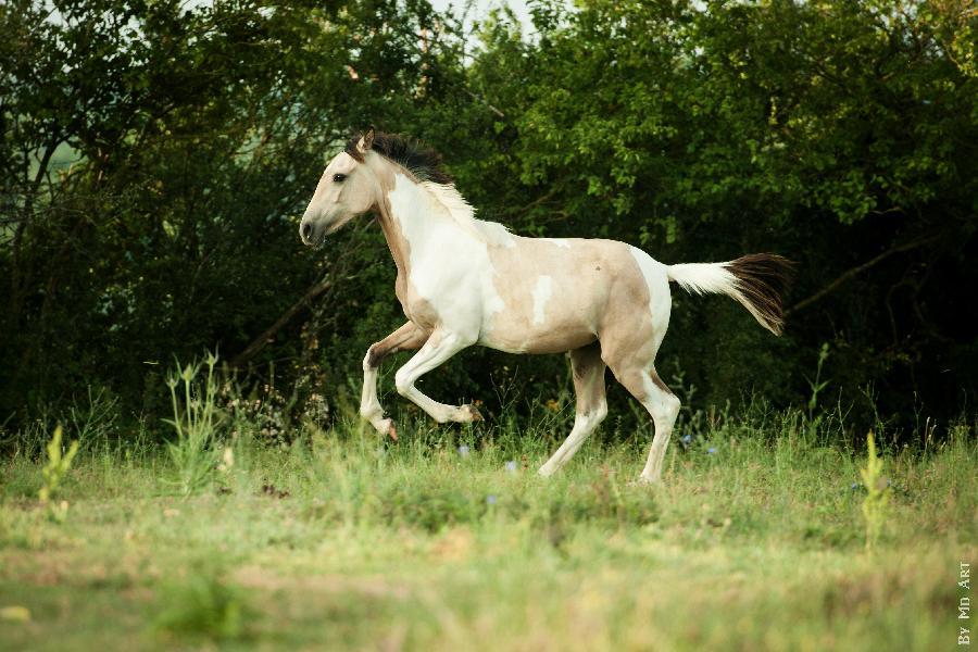 vendre sur terre equestre com annonces de chevaux poneys anes en vente. Black Bedroom Furniture Sets. Home Design Ideas